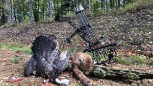 C.J. Taylor2019,  bobcat & Turkey same day!.jpg